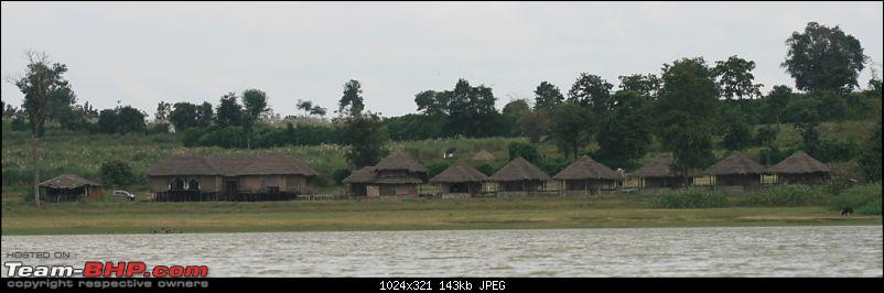 Life in Jungles - A Weekend at Kabini-bison-418.jpg