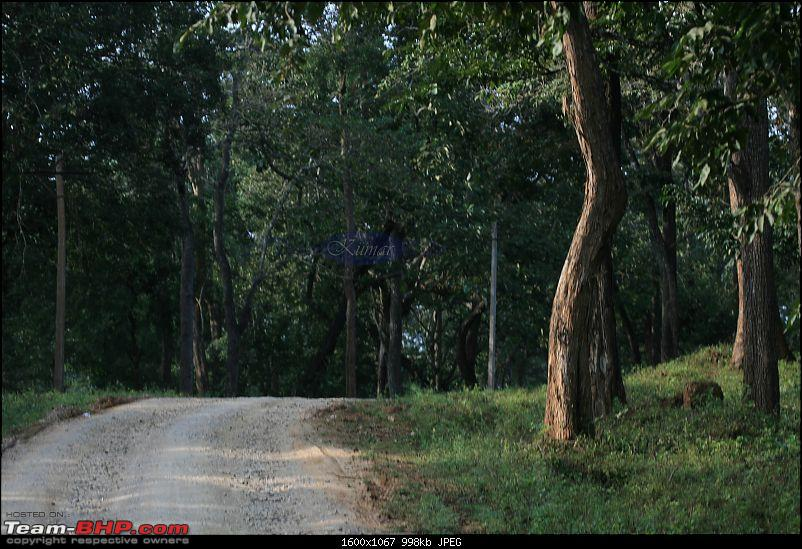 Life in Jungles - A Weekend at Kabini-bison-078-copy.jpg