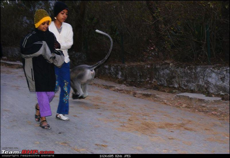 An Incredible Road Trip of a Lifetime to Udaipur, The Most Romantic City in the World-5-langur_bolting_past_kids.jpg