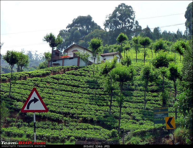 'Xing'ing around ! - Masinagudi, Ooty and Coonoor.-26.jpg