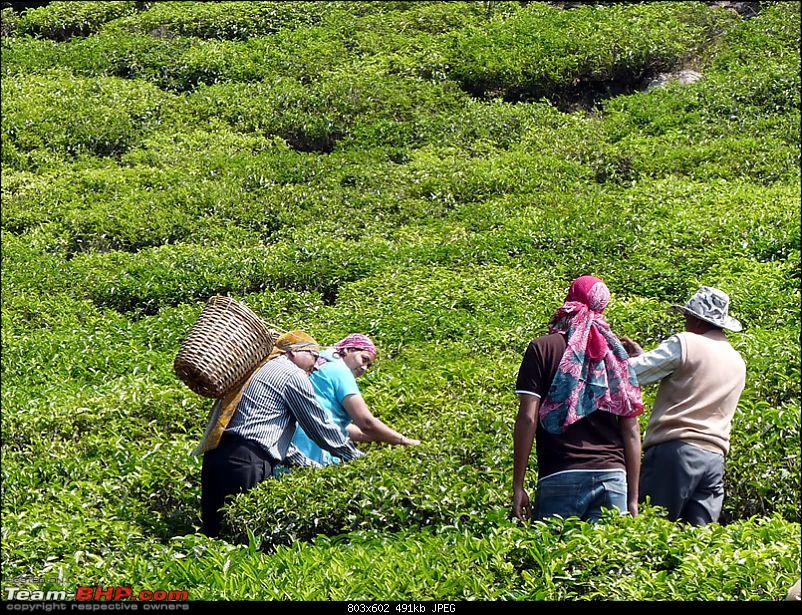 'Xing'ing around ! - Masinagudi, Ooty and Coonoor.-13.jpg</a><br /> <br /> <br /> Walked up to the Lambs rock view point...<br /> <br /> <a href=