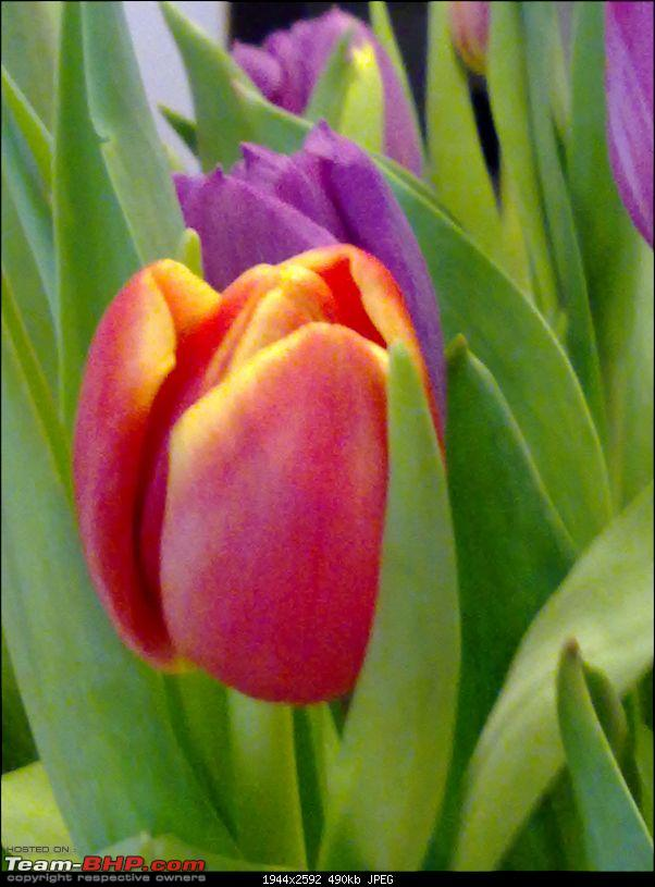 Business with Pleasure in the City of Ideas : Lund, Sweden-03-tulip-welcoming-guests.jpg