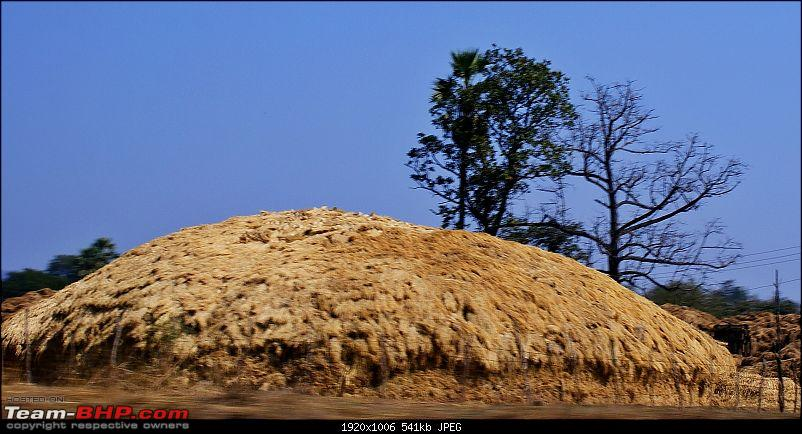 An Incredible Road Trip of a Lifetime to Udaipur, The Most Romantic City in the World-19-dried_hay.jpg