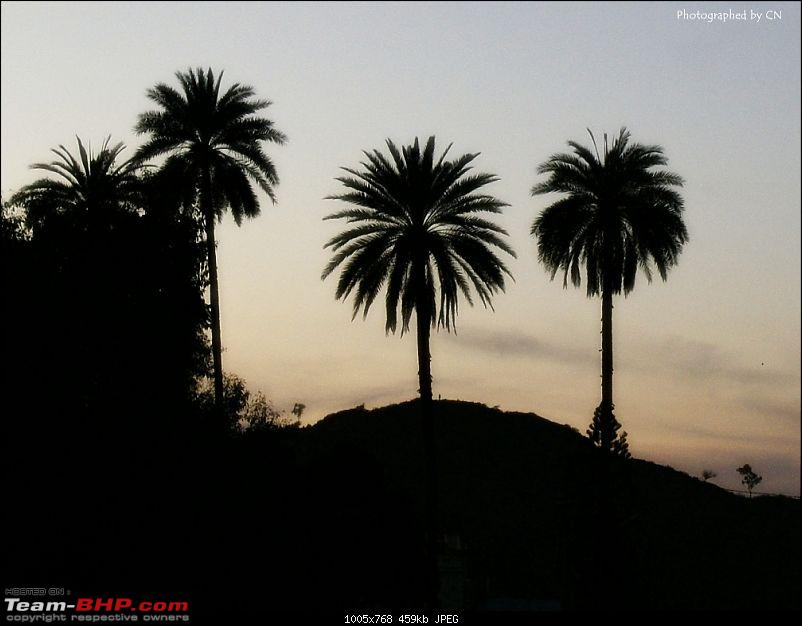 An Incredible Road Trip of a Lifetime to Udaipur, The Most Romantic City in the World-15-silhouette_palm_trees.jpg