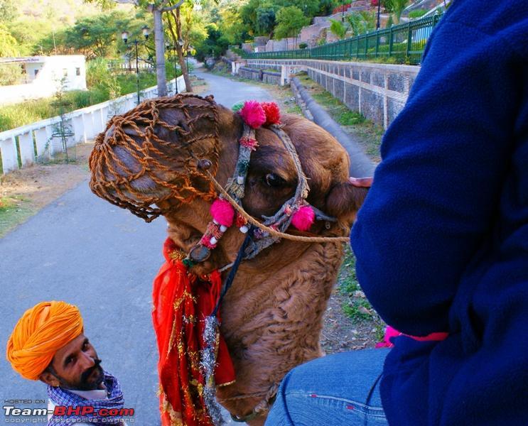 Name:  Pichola Lake  Camel Ride 10.JPG Views: 979 Size:  225.9 KB