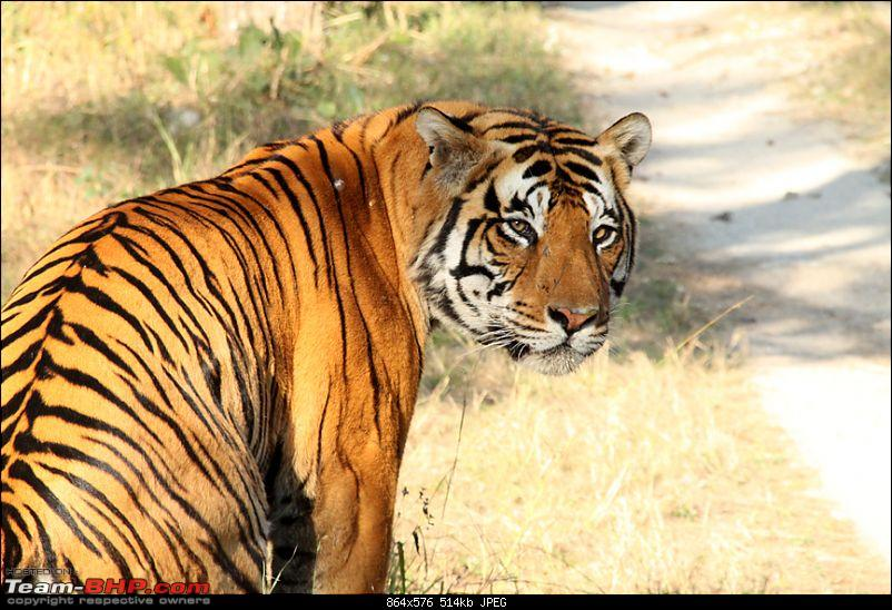 MP, Dec 2009 - the Land of the Tigers-img_3252s.jpg