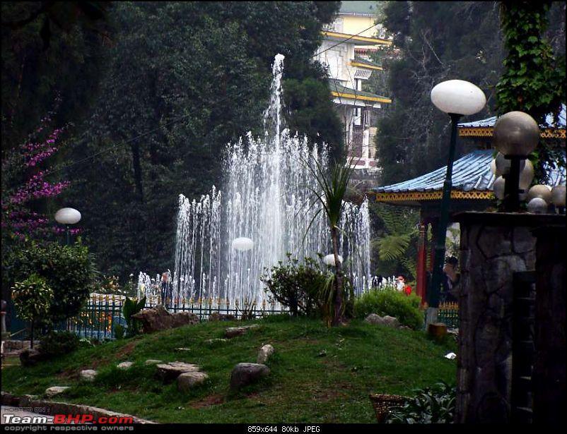 Gross Travelling Happiness - Bhutan, Sikkim, Darjeeling-flower-2k80.jpg