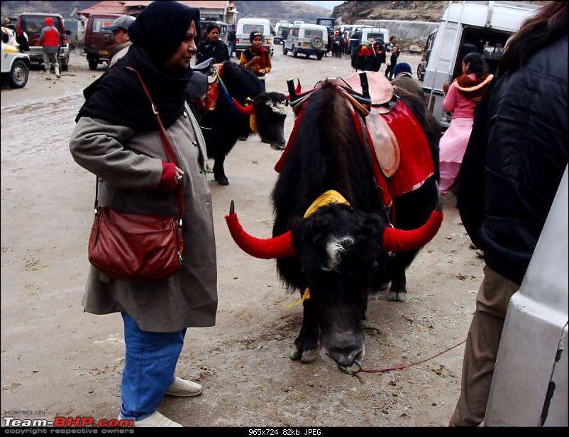 Gross Travelling Happiness - Bhutan, Sikkim, Darjeeling-backtotsomgo-17k80.jpg