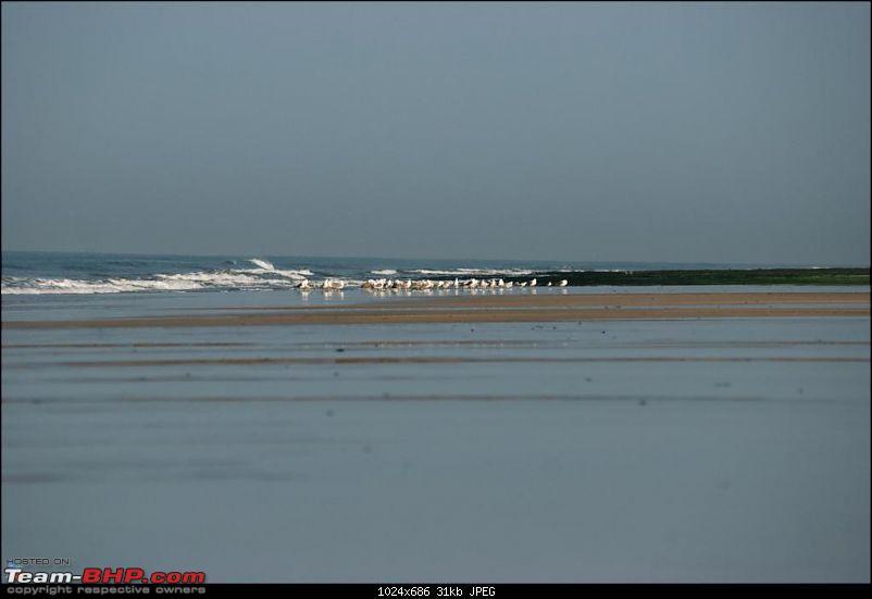 Coastal Gujarat and the Great Rann of Kutch-dsc_0633.jpg