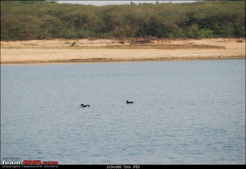 Coastal Gujarat and the Great Rann of Kutch-dsc_0669.jpg