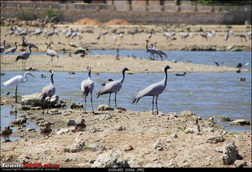 Coastal Gujarat and the Great Rann of Kutch-moded0240.jpg