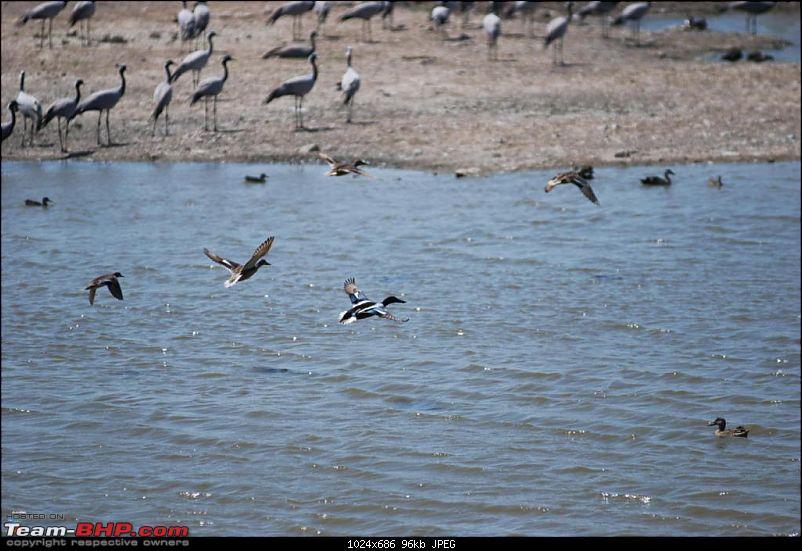 Coastal Gujarat and the Great Rann of Kutch-dsc_0723.jpg