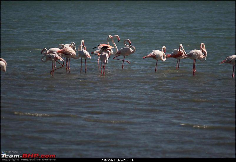 Coastal Gujarat and the Great Rann of Kutch-dsc_0893.jpg