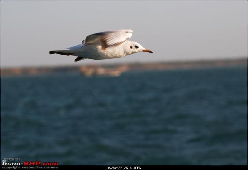 Coastal Gujarat and the Great Rann of Kutch-dsc_1034.jpg