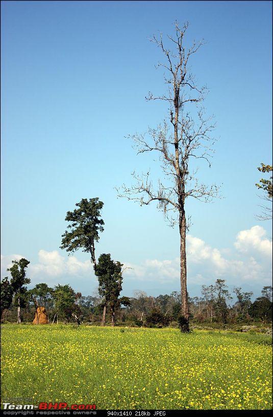 Safari VTT-TMT Exotic Tour - Known and Unknown Western Arunachal and Nameri[Assam]-img_6550.jpg