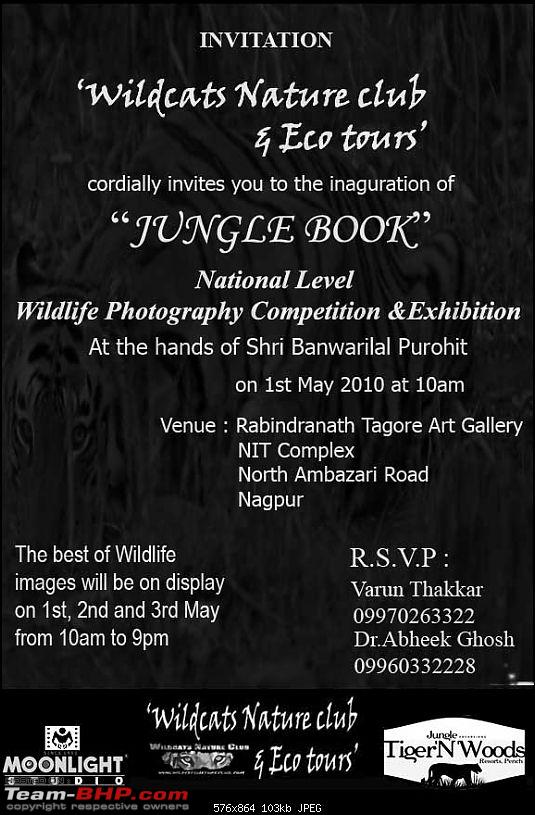 Tadoba, Pench forests, wildlife and 4 tigers!-final-invi2-copy.jpg