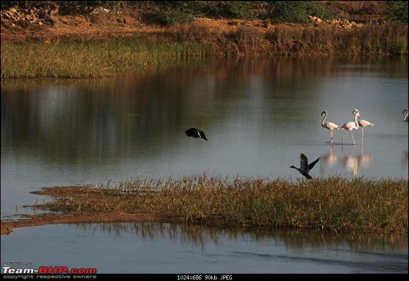 Coastal Gujarat and the Great Rann of Kutch-dsc_1080.jpg