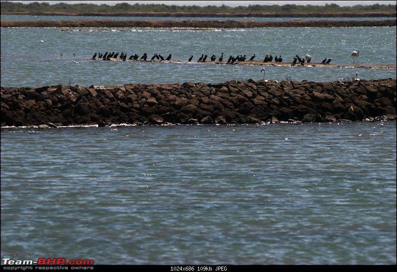 Coastal Gujarat and the Great Rann of Kutch-dsc_1239.jpg