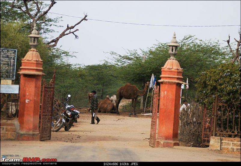 Coastal Gujarat and the Great Rann of Kutch-dsc_1433.jpg
