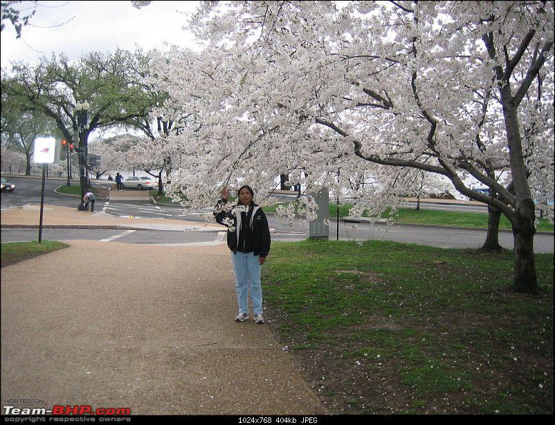 From DC to DC---a journey across continents-march2010-194.jpg