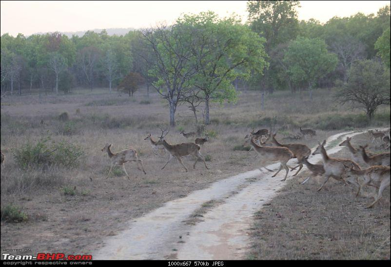 A Week-long Wildlife Adventure - Kanha & Bandhavgarh-img_0339_compressed.jpg