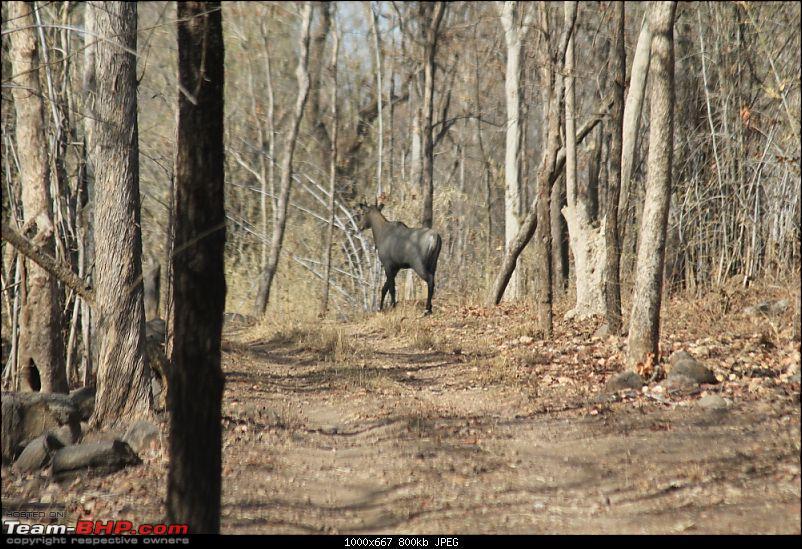 A Week-long Wildlife Adventure - Kanha & Bandhavgarh-img_0358_compressed.jpg