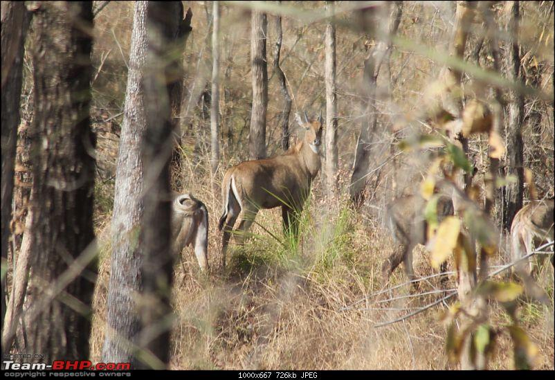 A Week-long Wildlife Adventure - Kanha & Bandhavgarh-img_0363_compressed.jpg