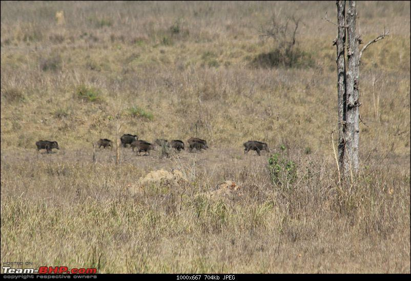 A Week-long Wildlife Adventure - Kanha & Bandhavgarh-img_0385_compressed.jpg