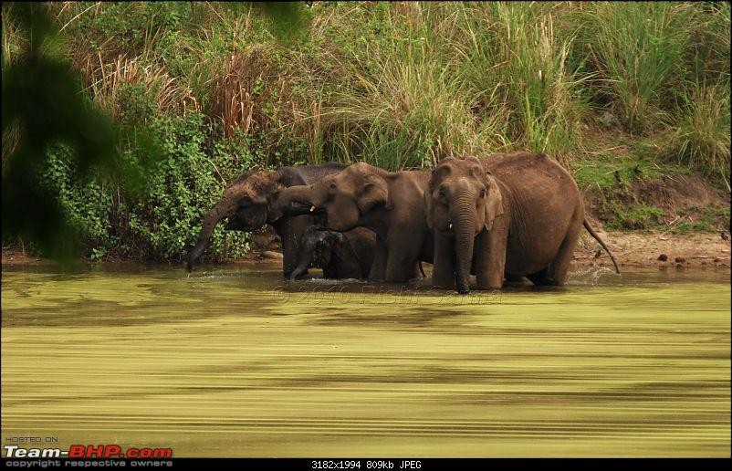 Wildlife beckons-elephantherd3.jpg