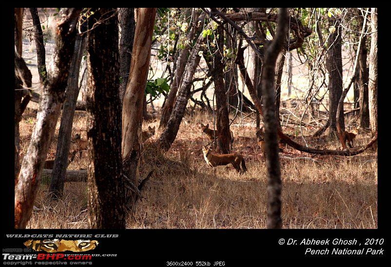 Tadoba, Pench forests, wildlife and 4 tigers!-pack-40-wild-dogs-pench.jpg