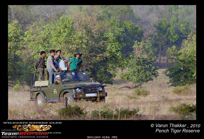 Tadoba, Pench forests, wildlife and 4 tigers!-riders-jungle.jpg