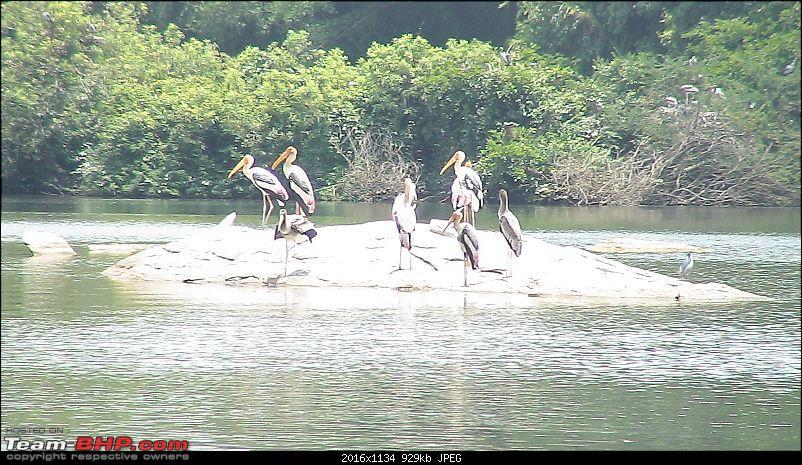 A day at Ranganathittu Bird Sanctuary and Balmuri / Yedamuri Falls-dsc01087.jpg