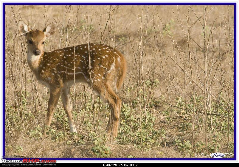 Life in Jungles - A Weekend at Kabini-kanha-day-1_0074.jpg