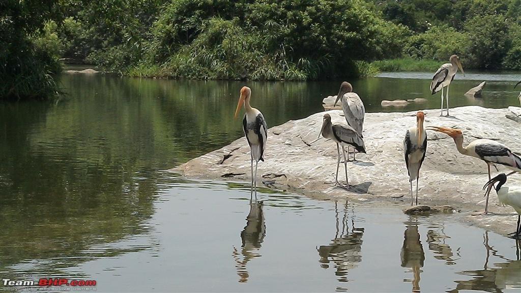 essay on ranganathittu bird sanctuary
