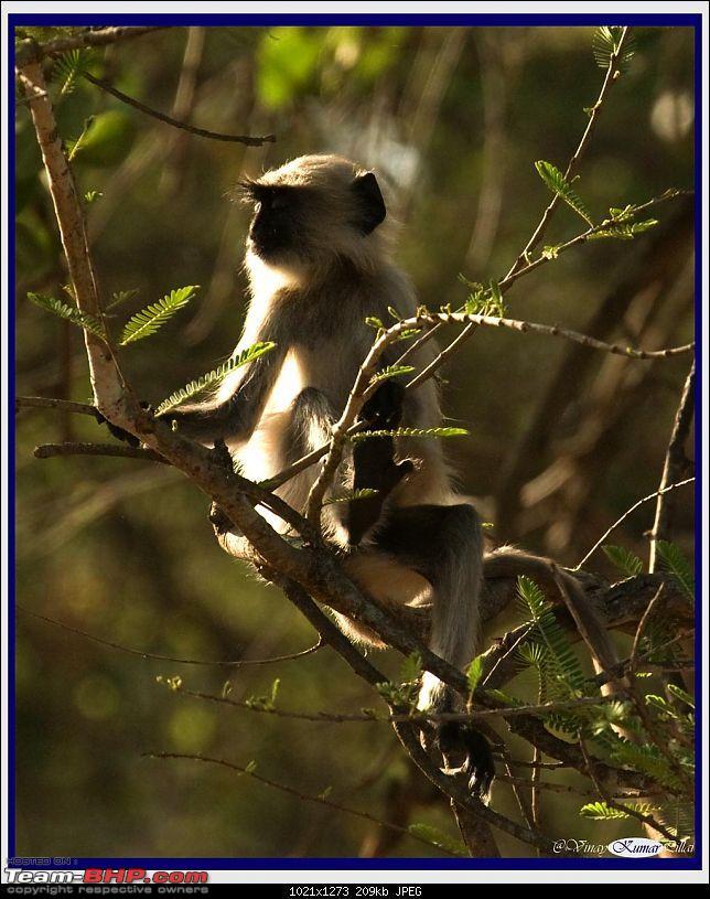Life in Jungles - A Weekend at Kabini-kanha-day-2_0675.jpg