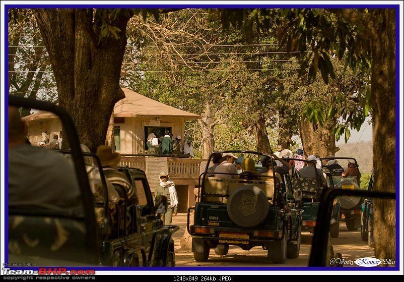 Life in Jungles - A Weekend at Kabini-kanha-day-2_0821.jpg
