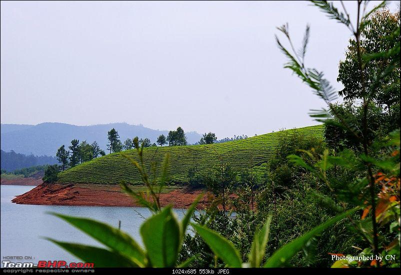 An incredible road trip to Velankanni, Kodaikanal and Ooty-6-a_photo_from_the_tea_estate.jpg