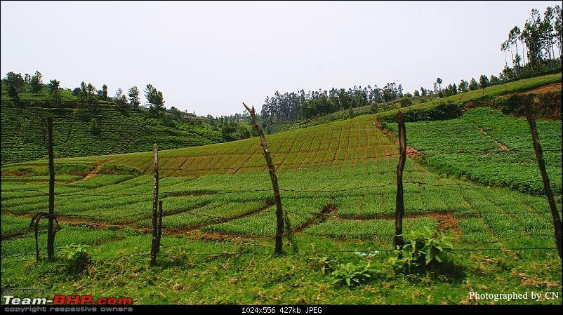 An incredible road trip to Velankanni, Kodaikanal and Ooty-14-cultivation_on_the_hillsides.jpg