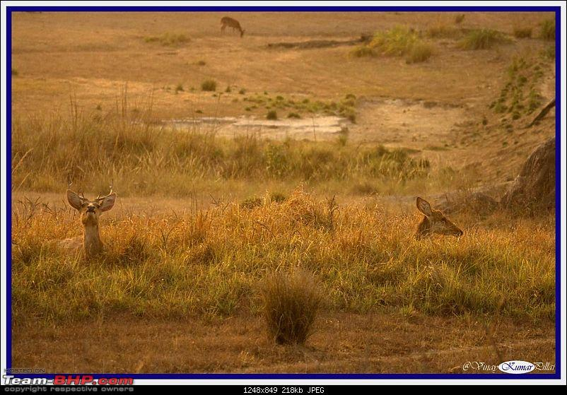 Life in Jungles - A Weekend at Kabini-kanha-day-3_1437.jpg
