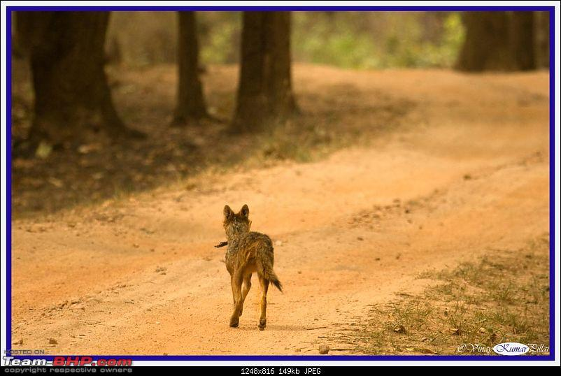 Life in Jungles - A Weekend at Kabini-kanha-day-4_1590.jpg