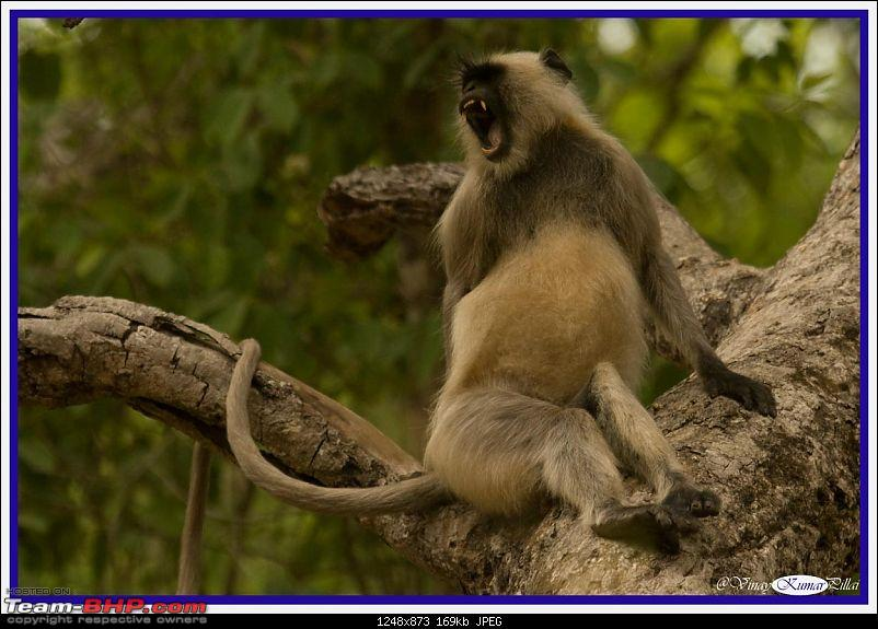 Life in Jungles - A Weekend at Kabini-kanha-day-4_1607.jpg