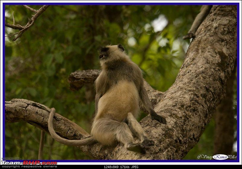 Life in Jungles - A Weekend at Kabini-kanha-day-4_1608.jpg