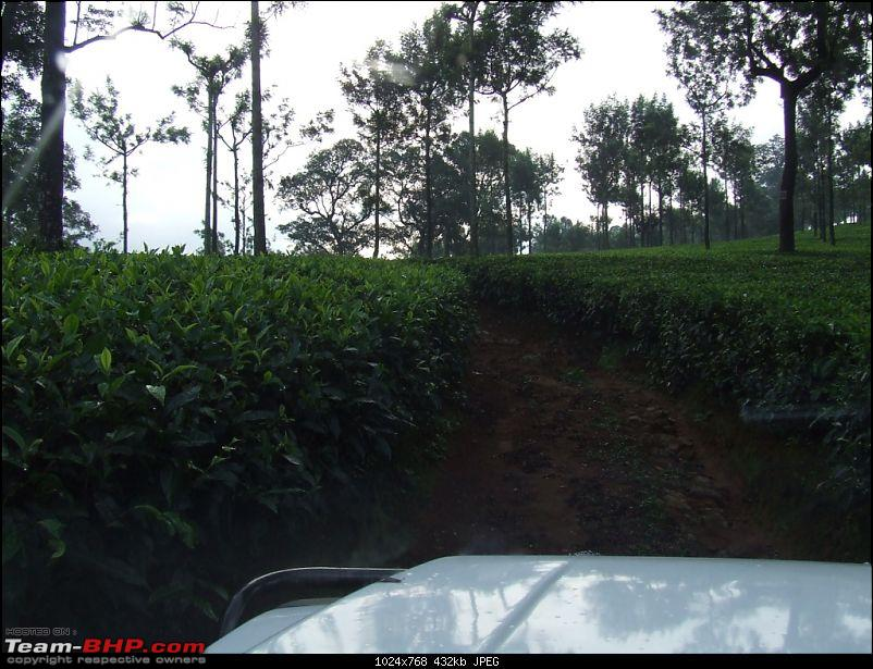 White Lightning strikes Valparai-42.jpg