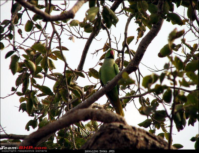 A Rajasthan Photolouge - Trip down memory Lane-parrot-jaigarh.jpg