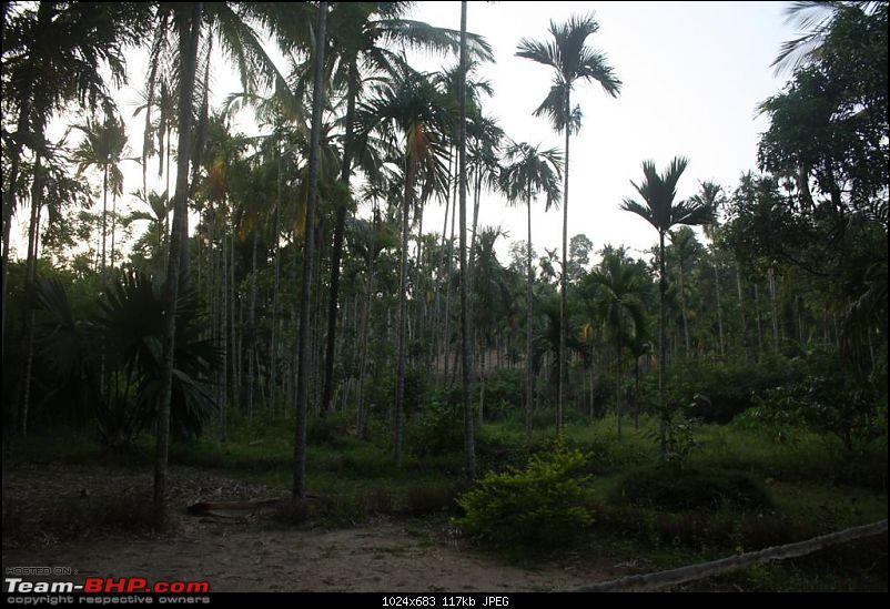 Five Days - Kochi - Kalpeta - Kodaikanal - Valparai - Kochi-resort-9.jpg