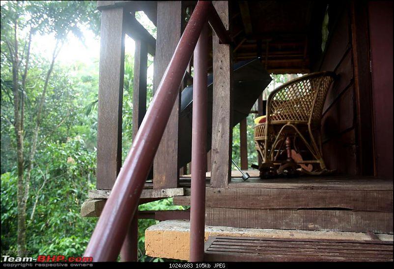 Five Days - Kochi - Kalpeta - Kodaikanal - Valparai - Kochi-tree-house.jpg