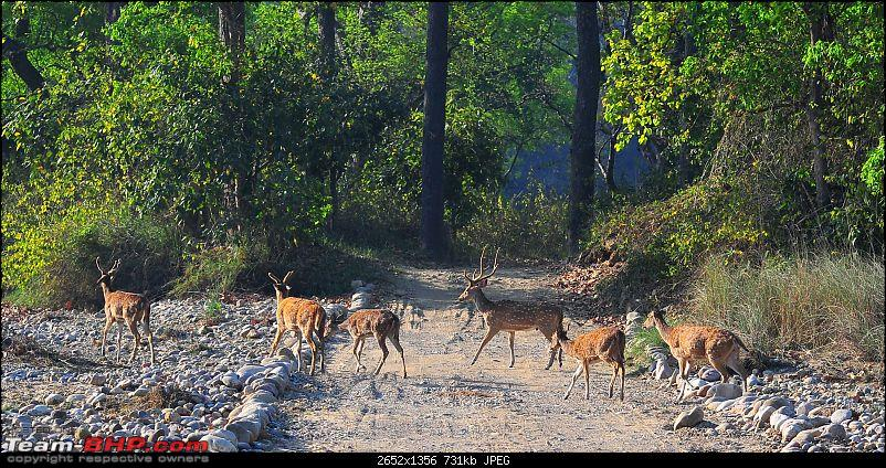 Gurgaon - Jim Corbett - Ranikhet - Gurgaon: The Unsatiated Quest-2141.jpg