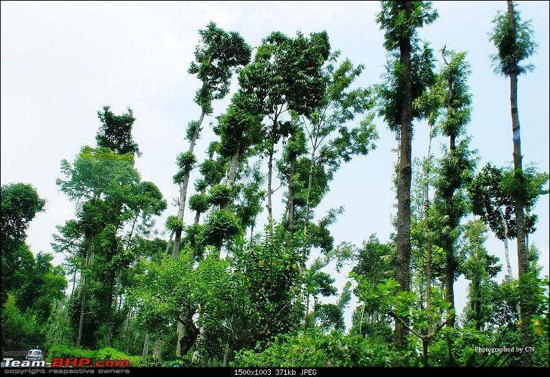 An incredible road trip to Velankanni, Kodaikanal and Ooty-11-beautiful_salem_highway.jpg