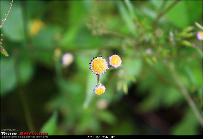 Photolog - Valley of Flowers - Hemkund Sahib-img_0300.jpg