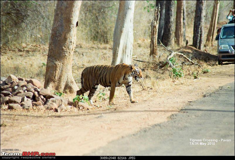 A visit to the Sher khan's den- Tadoba Andhari tiger reserve.-03840027.jpg